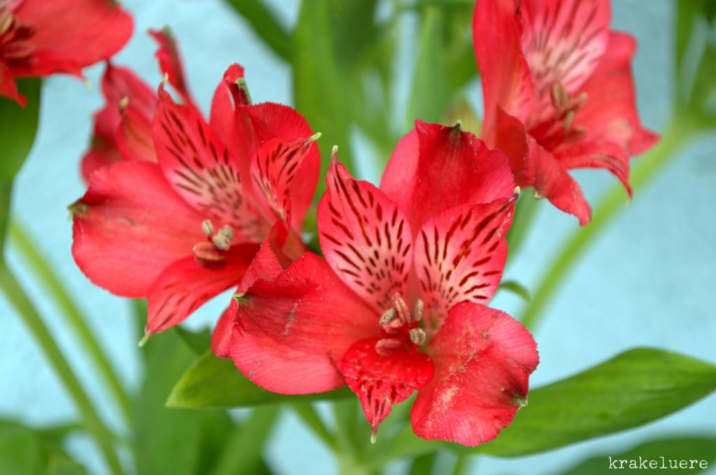 krakeluere.de - Blumen