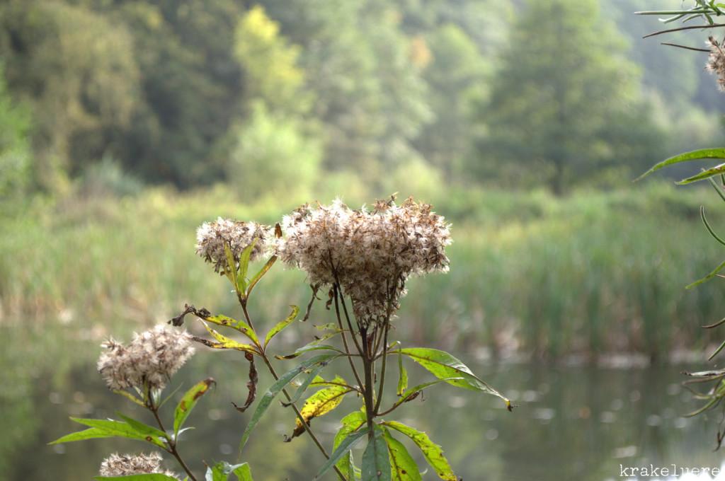 Ein Ausflug in den Wald - krakeluere.de